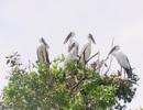 Khám phá vườn Quốc gia Tràm Chim mùa nước nổi