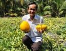 Năm nay, trái cây độc, lạ trưng Tết sẽ hiếm hàng