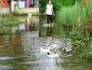 Hàng chục hộ dân sống giữa thành phố… bì bõm lội nước 4 năm qua