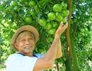 Thời tiết thất thường… trái cây trưng tết lo khan hàng, tăng giá