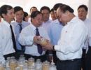 Thủ tướng sốt ruột vì mất 1 triệu tấn thóc do hạn mặn