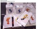 Giá iPhone 6S xách tay giảm từ 2-4 triệu chỉ sau 1 ngày