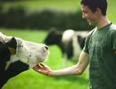 Một ngày ở trang trại những cô bò hạnh phúc