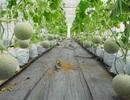 Triển khai thành công dự án hệ thống quản lý nông nghiệp công nghệ cao tại TPHCM