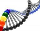 Phát hiện 3 gen liên quan đến loãng xương ở người Việt