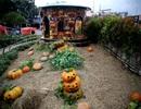 Vườn bí ngô đậm chất Halloween thu hút bạn trẻ ở Sài Gòn