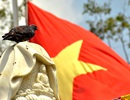 Rợp cờ hoa kính mừng Phật đản