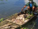 Sở Tài nguyên - Môi trường kiểm tra đập nước có cá chết hàng loạt