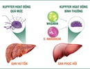 Cảnh báo viêm gan và những hậu quả nguy hiểm