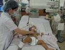 Lào Cai: Đã có 2 trường hợp tử vong do viêm não Nhật Bản