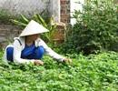 Ninh Thuận: Bị cho nghỉ việc khi sinh con, giáo viên kiện hiệu trưởng