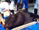 Thêm 1 con bò tót chết tại khu bảo tồn thiên nhiên