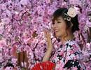 Giới trẻ Sài Gòn mặc Kimono chụp ảnh với hoa anh đào