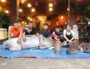 """Bốn con cá """"khủng"""" từ Campuchia về Sài Gòn"""