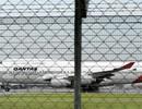 Máy bay chở khách không thể cất cánh vì rắn