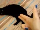 """Mèo giả chết khi thấy """"súng ngón tay"""""""