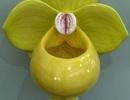 Bồn cầu hình hoa lá đẹp mỹ miều