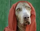 """Chú chó """"siêu mẫu"""" thu hút triệu lượt theo dõi trên instagram"""