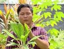 Chàng trai kiếm 5 tỷ/năm từ lá cây