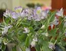 Mẹo hay: Chỉ mất vài phút để có lọ hoa tự nhiên trong phòng làm việc
