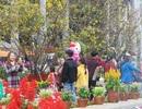 Đà Nẵng: Hàng ngàn người náo nức về Hội hoa xuân chơi Tết
