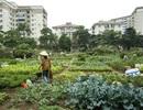 Ở chung cư vẫn được ăn rau sạch nhà trồng