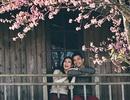 Ảnh cưới đẹp như mơ dưới tán hoa anh đào Đà Lạt