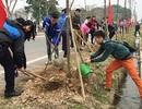 Hà Nội phát động Tết trồng cây Xuân Bính Thân