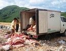 Tiêu hủy gần 1,9 tấn thịt heo thối đang trên đường đi tiêu thụ