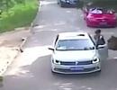 Trung Quốc: Du khách bị hổ tấn công kiện công viên hoang dã