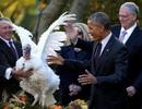 Những mùa lễ Tạ ơn của Tổng thống Obama trong Nhà Trắng