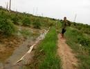 Lão nông bị phạt ngược 5 triệu đồng: Miễn tiền xử phạt