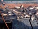 Vụ Formosa xả thải gây cá chết hàng loạt: Ngư dân Quảng Bình đề nghị được khám sức khỏe