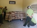 Giám đốc Sở dùng kho cơ quan để cất giữ gỗ trái phép