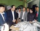 Hơn 2.600 tấn hải sản tồn kho tại Quảng Bình: Các Bộ vào cuộc tháo gỡ