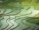 Ruộng bậc thang Yên Bái lọt top ảnh đẹp cuộc thi quốc tế