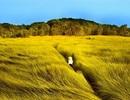 """Điện ảnh Việt nhìn từ hiện tượng """"Tôi thấy hoa vàng trên cỏ xanh"""""""