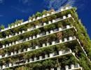 Chung cư xanh mướt màu tre, trúc gây sốt giữa lòng Paris