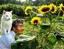 """""""Chú mèo nổi tiếng nhất nước Nhật"""" đã qua đời"""