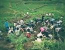 """Dân làng phát hoảng vì """"dân tứ xứ"""" đổ xô đến đào… đá quý"""