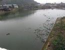Dân hoang mang vì cá chết nổi trắng sông