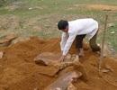 """Xôn xao phát hiện ngôi mộ """"lạ"""" khi đào móng xây trường"""