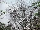Hàng trăm con chim bất ngờ xuất hiện tại ngôi đền thiêng