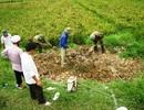 Nghệ An: Xuất hiện cúm H5N1 trên đàn vịt