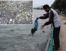 Cá Hồ Tây chết nổi, người dân vẫn thản nhiên… xả rác