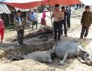 Một gia đình bị sét đánh chết cả 5 con trâu