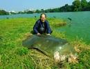 Xác cụ Rùa Hồ Gươm được chế tác bằng phương pháp nhựa hóa