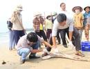 """Vụ cá chết ở miền Trung: Hướng dẫn người dân """"nhận diện"""" cá chết bất thường"""