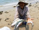 Đề xuất Chính phủ hỗ trợ chuyển đổi nghề cho ngư dân vùng cá chết