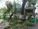 Gần 800 tấn rác trên đường phố Hà Nội đã được thu dọn